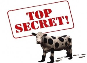 Top Secret Cow